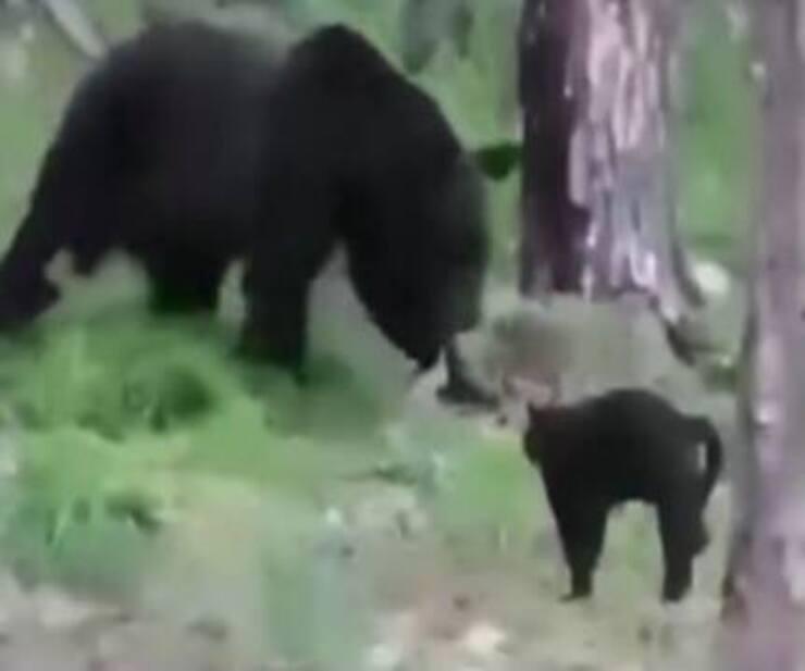 Vasya mette in fuga l'orso bruno (Screen video Facebook)