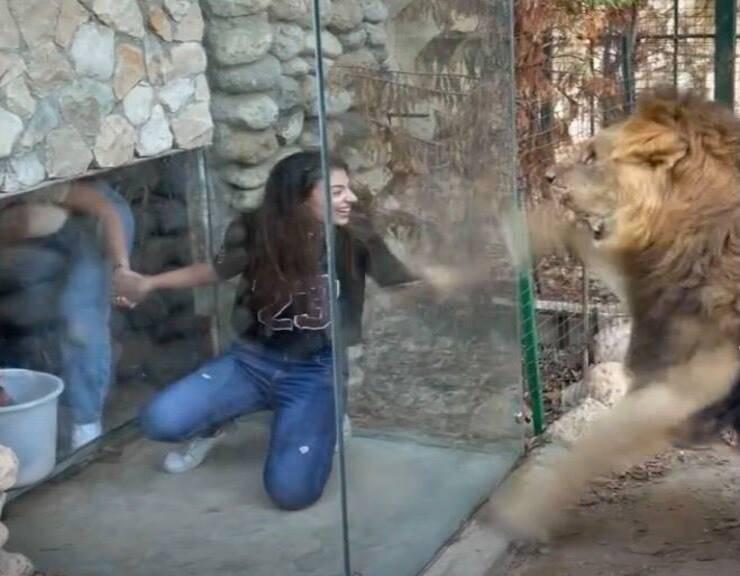 Visitatrici allo zoo per vedere il leone in gabbia (Screen video Instagram)