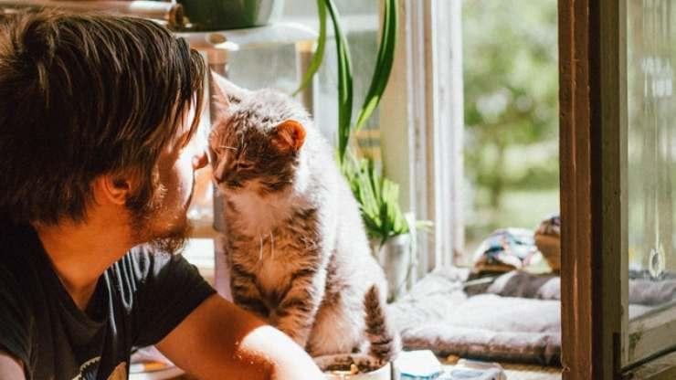 ai gatti piacciono le persone