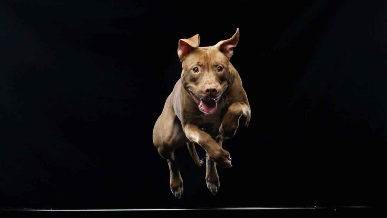 aumentare massa muscolare cane