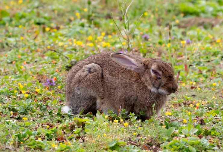 Insufficienza renale nel coniglio
