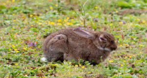 Il coniglio e l'insufficienza renale