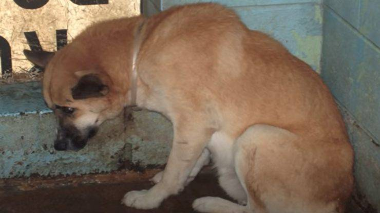 Il cane Jimmy triste (foto video)