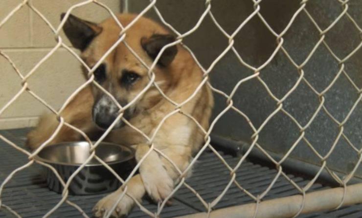 cane in gabbia (Foto video)