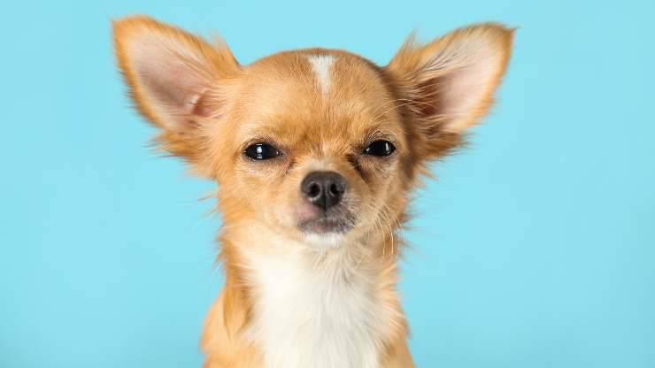 cani capiscono quando mentiamo