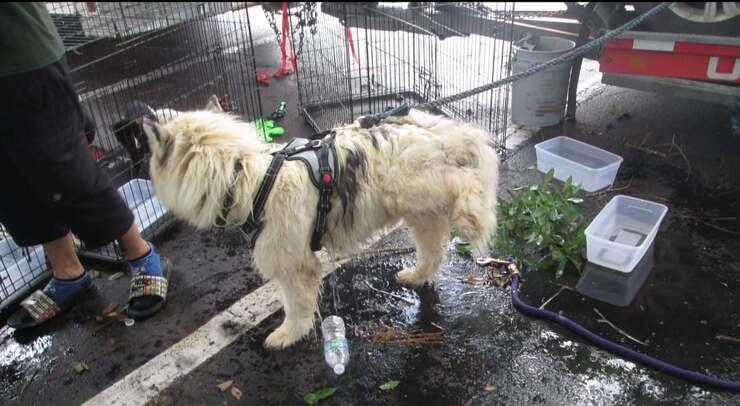 Uno dei cuccioli trovati all'interno del furgone affamato e disidratato (Foto Facebook)