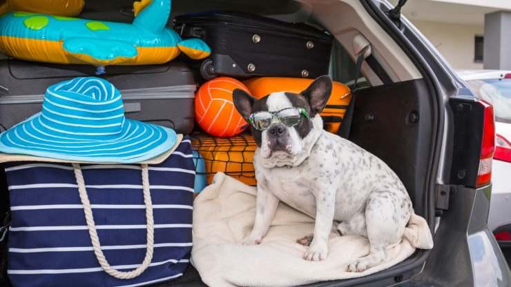 cane ha bisogno della vacanza