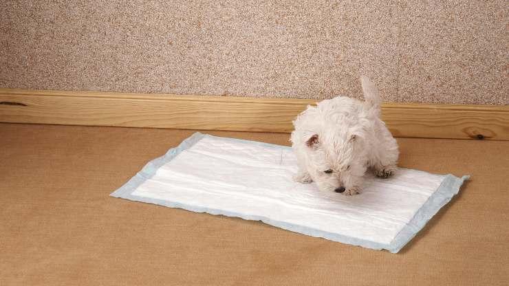 cane non alza la zampa per fare pipì
