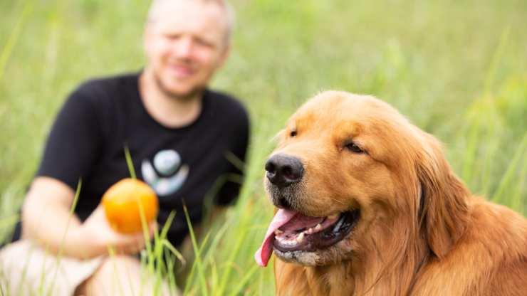 cane può mangiare la papaya