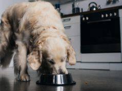 cane può mangiare semid di chia