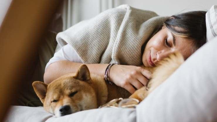 cane rimedio per insonnia