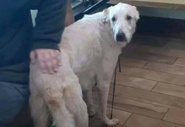 cane salva bambino autistico (Foto Facebook)