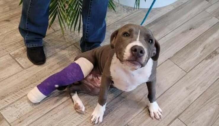 il cane abusato con la zampa rotta (Foto Facebook)
