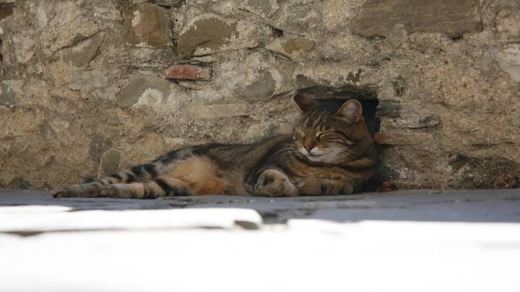 Gatto sbatte la testa contro il muro