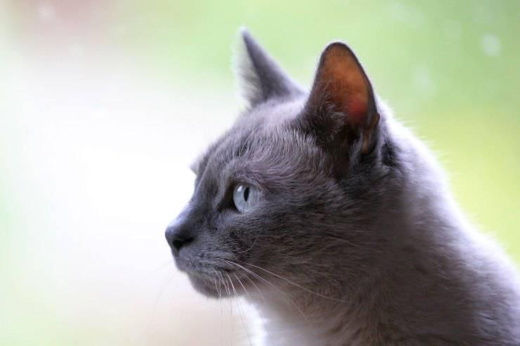 Dieta per il gatto epilettico