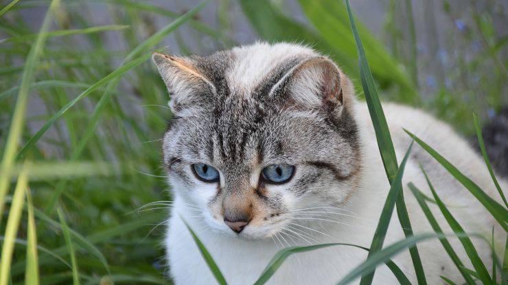 Istinto predatorio nel gatto