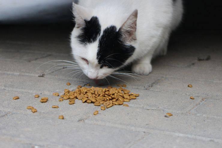 Il cibo giusto per il gatto