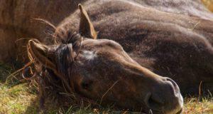 cavallo a terra