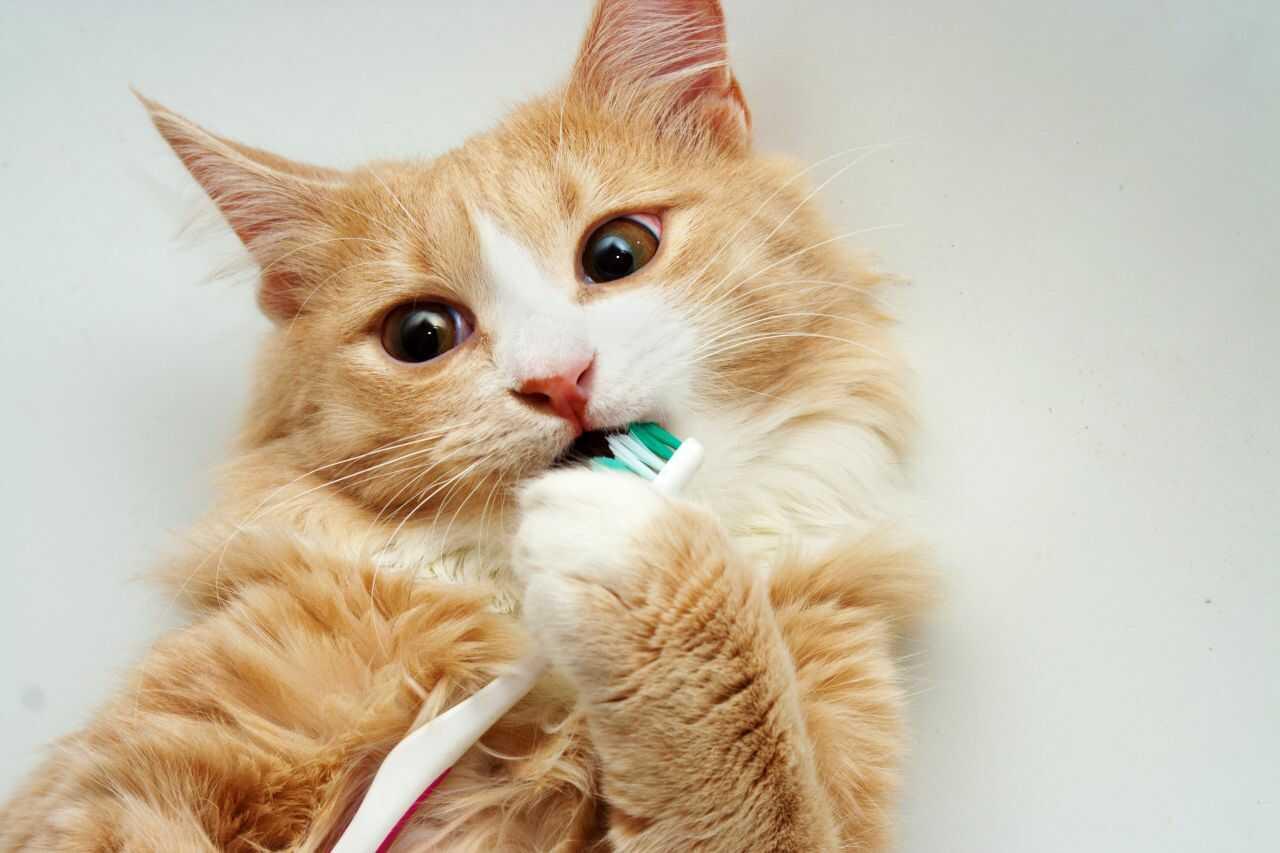 come scegliere dentifricio gatti