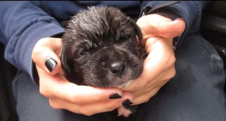 Un dei 17 animali trovati all'interno di un furgone senza cibo e acqua (Foto Facebook)