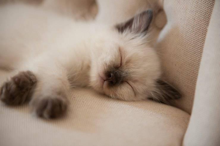 Il gatto non dorme con me
