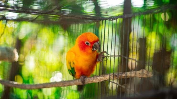 depressione nel pappagallo