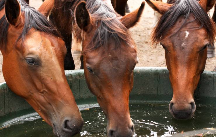 disidratazione nel cavallo