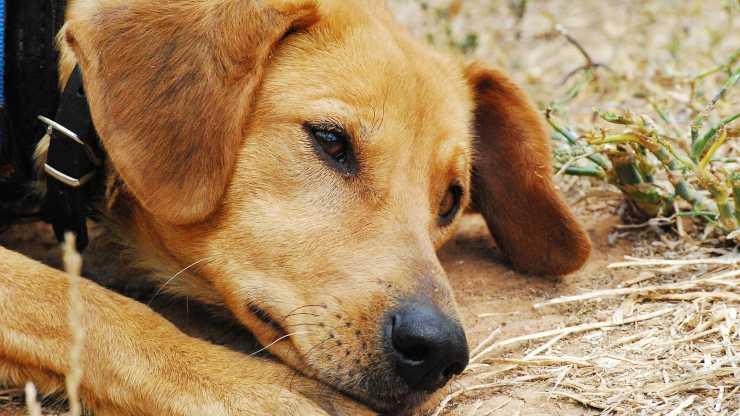 cane legato catena sole