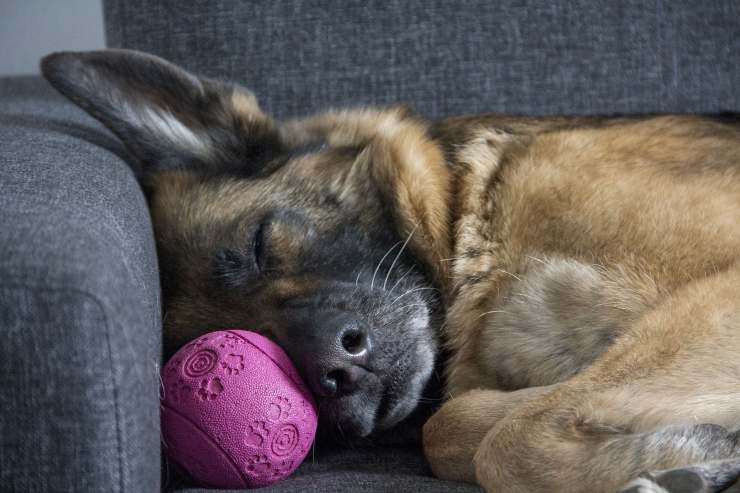 Contrazioni nel cane