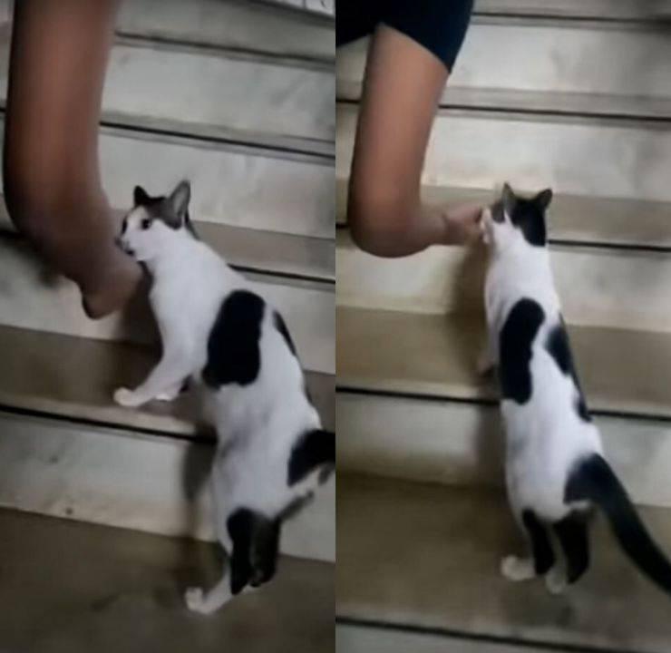 gatta porta padrone gattini