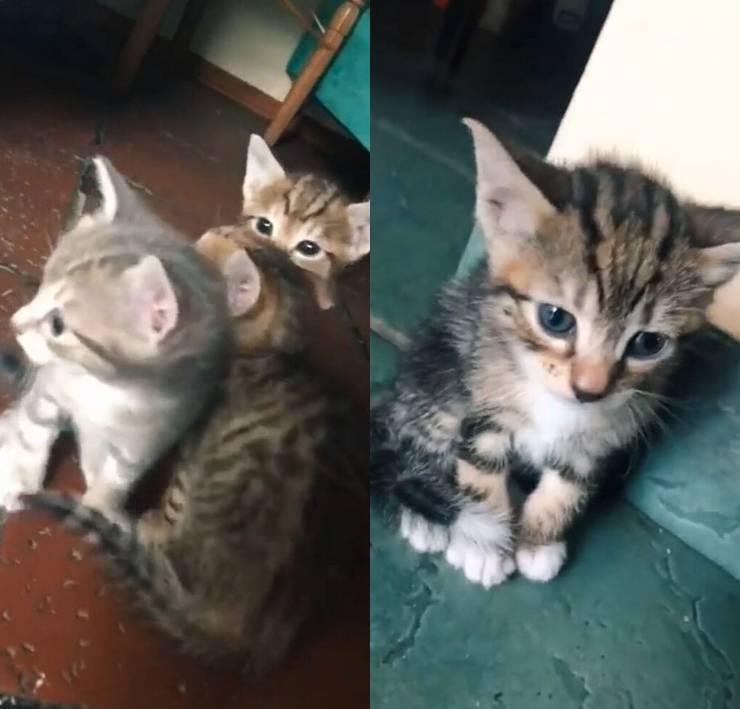 gatto consola fratellino solo video