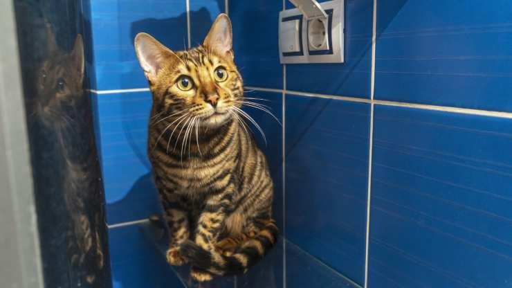 gatto guarda quando faccio doccia