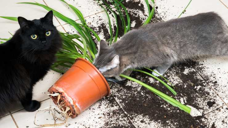 gatto mangia terra