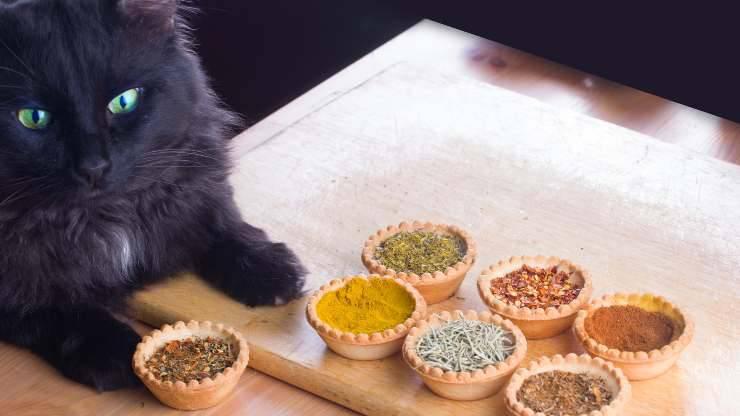 gatto può mangiare cumino