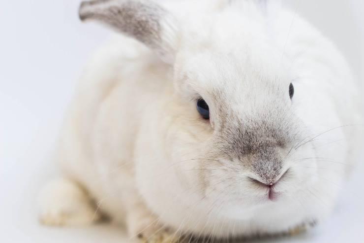 Il coniglio e l'anguria