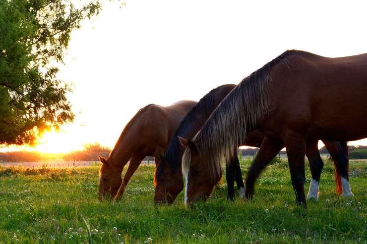 Cibi estivi per il cavallo