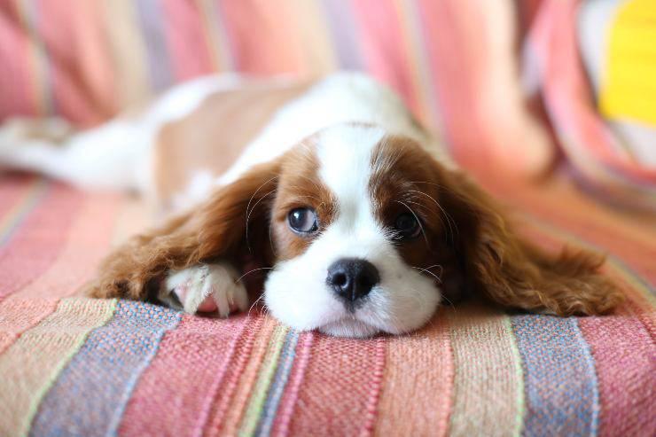Il cane e la solitudine