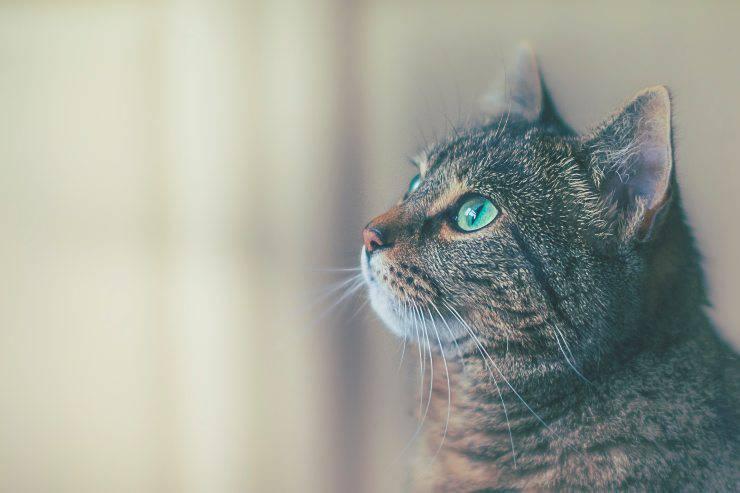 Il felino epilettico e l'alimentazione