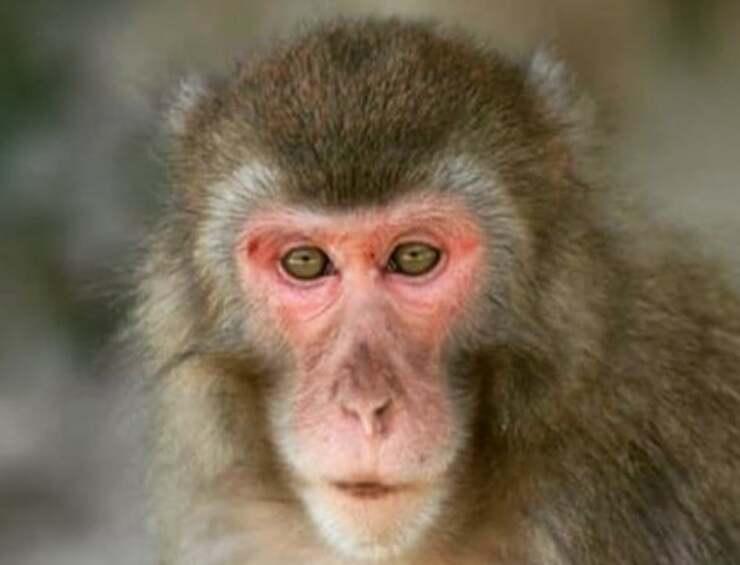 Macaco (Foto Instagram)