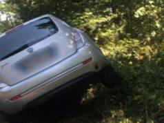 Serpente causa un incidente infilandosi in una macchina in movimento (Fonte amore a quattro zampe)