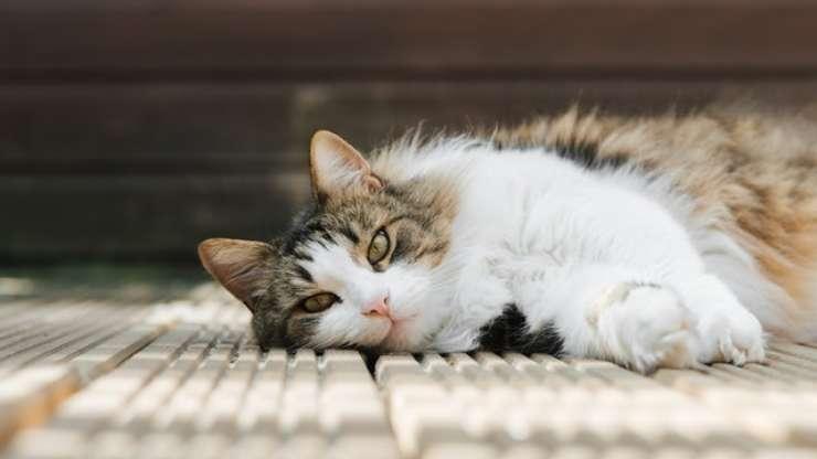 meteo influenza umore gatto