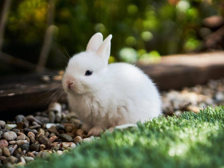 Il coniglio e le verdure