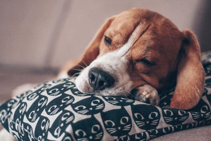Le contrazioni del cane