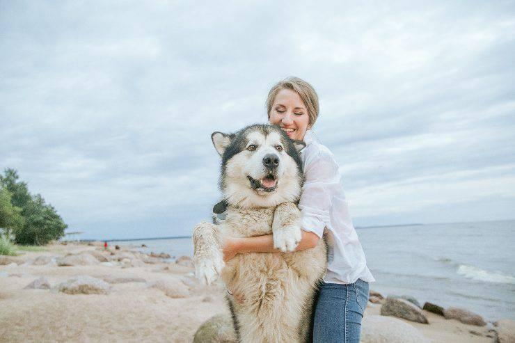 Razze canine protettive