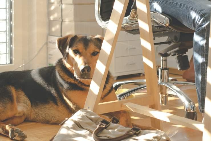 Il cane adulto sporca in casa