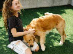 prendersi cura del pelo del cane in estate