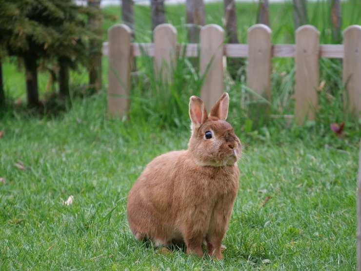 L'insufficienza renale del coniglio