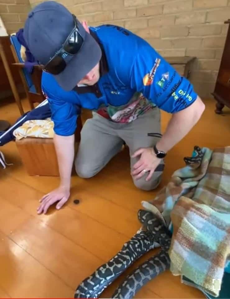 Pitone Tappeto scambia una coperta per un cane e cerca di mangiarla, l'uomo tenta di salvarlo (screen video)