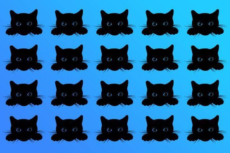 Il test visivo del gatto diverso: Riesci a trovarlo in soli 10 secondi?