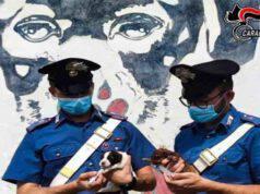Carabinieri salvano 7 cuccioli (Screen Facebook)
